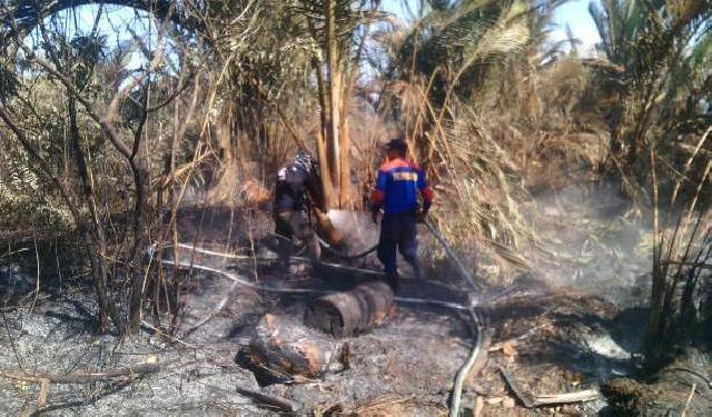 2 Hektare Kebun Sagu Terbakar di Rangsang Pesisir